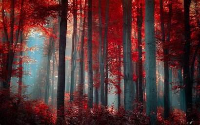 Forest Nature Forrest Desktop Backgrounds Wallpapers Mobile