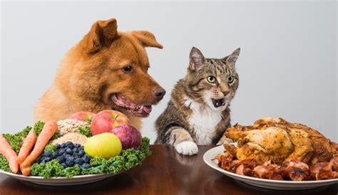 nourriture pour chat constipe