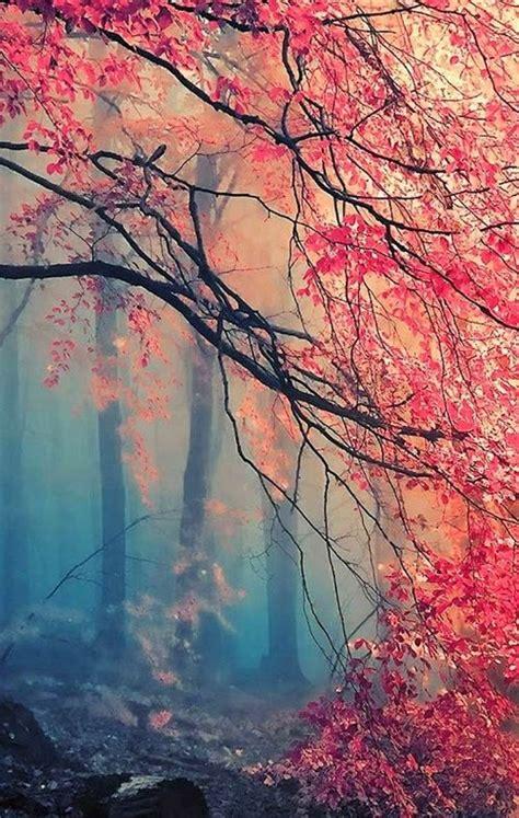 misty japanese maple good  phone background