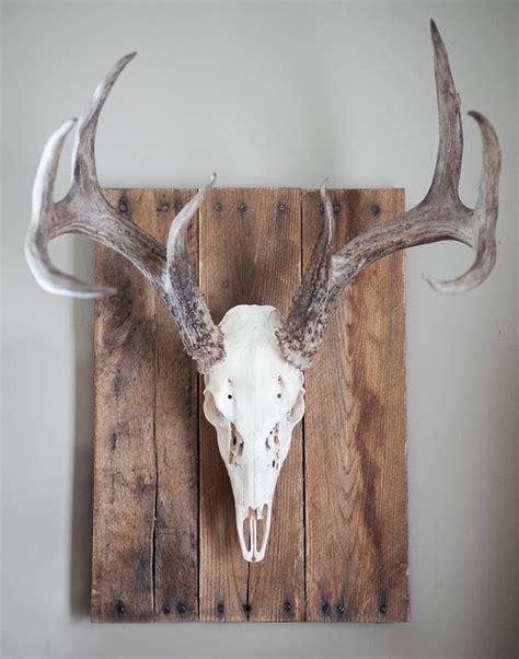 best 25 deer skull decor ideas on pinterest deer skulls skull with crown and deer horns decor