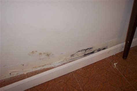 How To Detect Household Mold