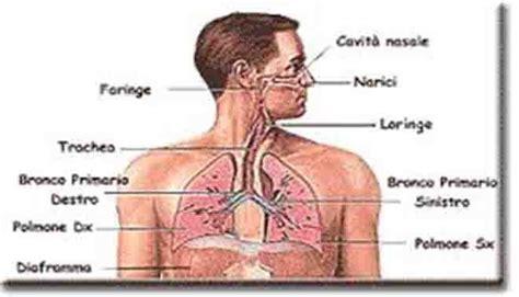apparato respiratorio riassunto