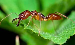 Was Essen Ameisen : wo leben ameisen wo leben ~ Lizthompson.info Haus und Dekorationen