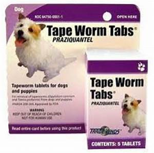 How To Treat Tapeworms In Cats