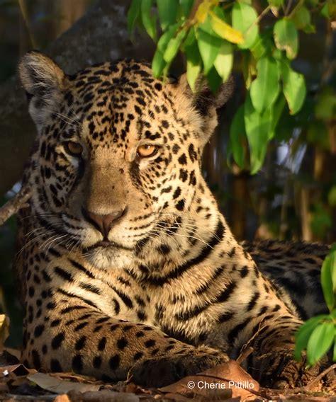 backyard birding in merida yucatan and beyond my jaguar