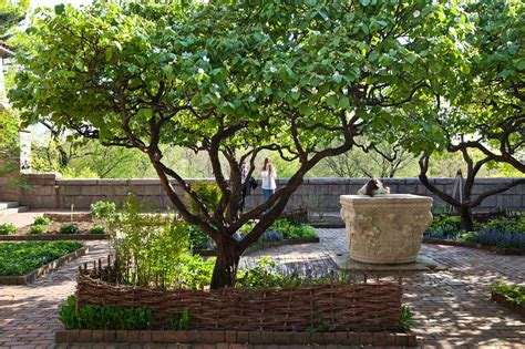 small outdoor trees in praise of the misunderstood quince tree the new york 5534