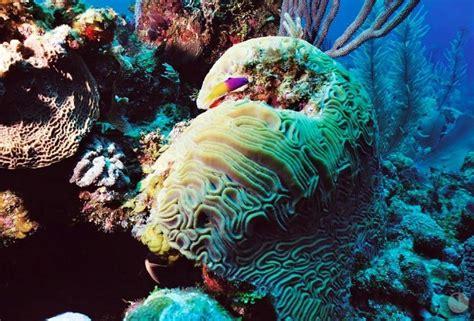 Northern Belize Reef Week | Belize Events | Grand Caribe Belize