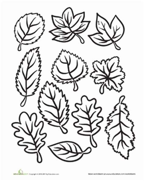 color the fall leaves worksheet education 542 | color fall leaves nature kindergarten