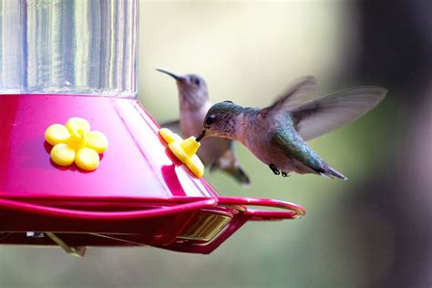 top  backyard bird feeding mistakes