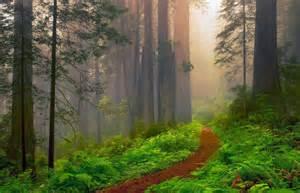 California National Redwood Forest Wallpaper