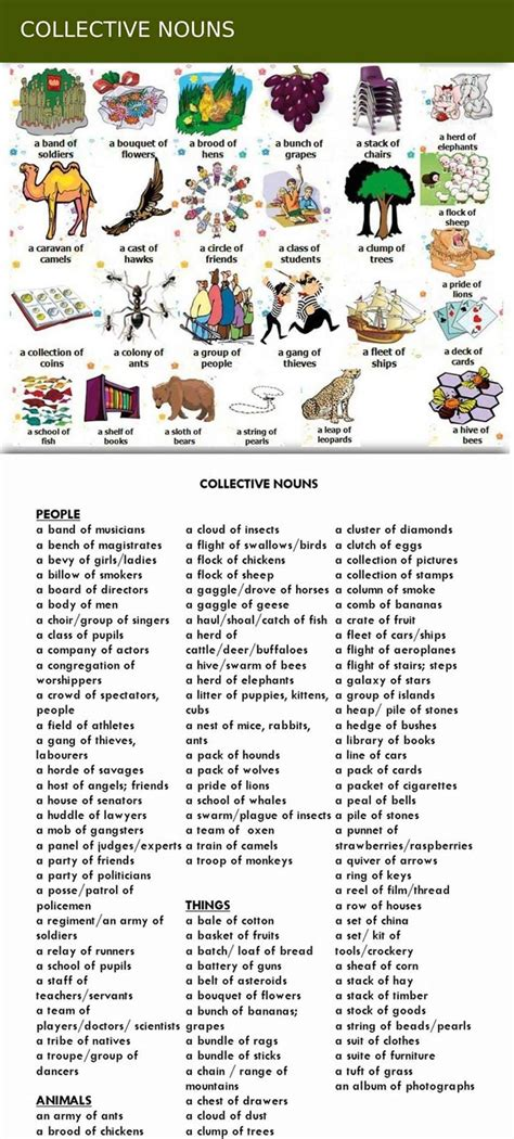 collective nouns group words for animals and things eslbuzz learning english
