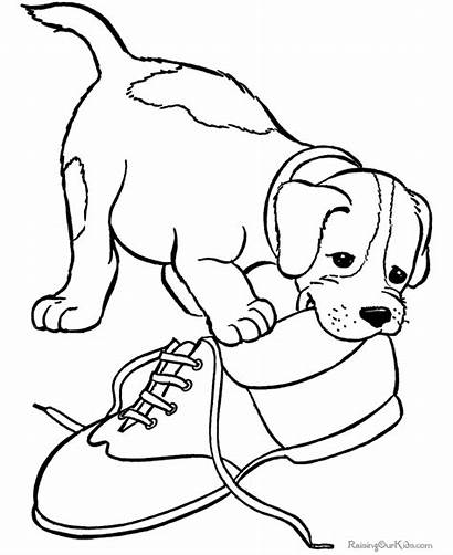 Coloring Dogs Puppies Popular Dog Puppy Printable