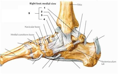 (pic) Leg And Ankle Joint At University Of New
