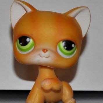kitten shorthair 11 cat raised paw from amazon