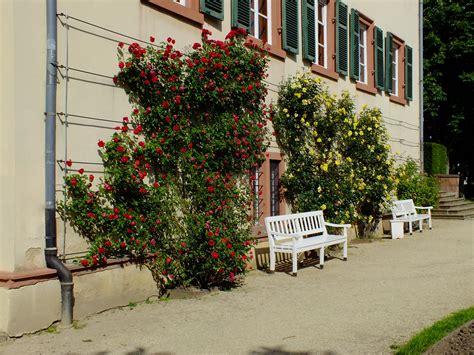 Kleines Tannenwäldchen Bad Homburg by Kleine Fototour Im Schloss Und Kurpark Volkersworld