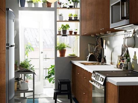 kitchen plants decorate garden basil grow