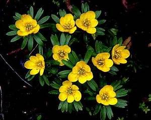 Welche Blumen Blühen Im Winter Draußen : einheimische bl tenpflanzen im fr hjahr ~ Watch28wear.com Haus und Dekorationen