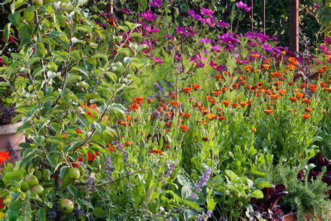 calendula flowers fruit gardening plant flower stock
