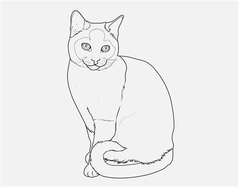 katzen malen vorlagen elegant kostenlose malvorlage katzen