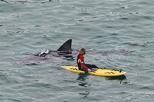 A Massive Shark Swam Up Behind A Surfer In Cornwall