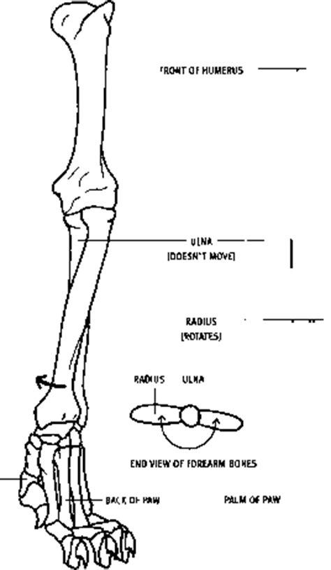 hind foot animal anatomy joshua nava arts