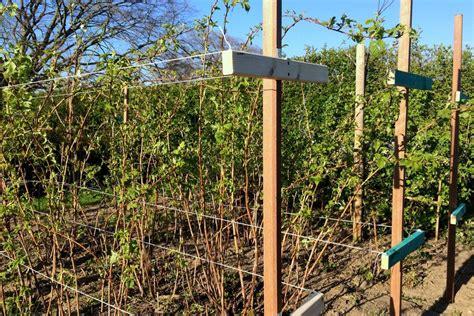 Garten Pflanzen Himbeeren by Fr 252 Hling Es Tut Sich Was Im L 228 Ndchenlust Garten Neue