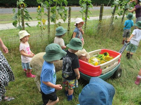 farm activities newstead country preschool 418 | collecting sunflower seeds