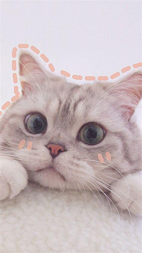 cat aesthetics wallpapers 2020