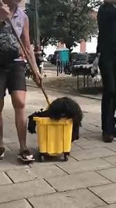 An Adorably Dreadlocked Dog Dresses as a Mop In a Bucket ...