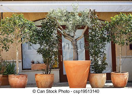 year plants for pots mediterranean plants in pots mediterranean plants in pots 1979