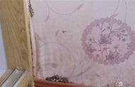 防止牆紙發霉的技巧大揭秘 霉雨季也有好心情 - 每日頭條