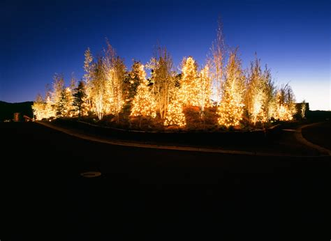 tree park lights 28 images lighting to trees in the