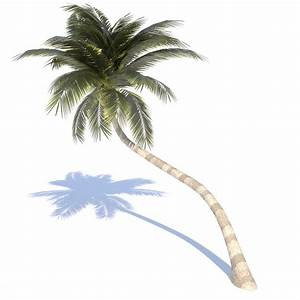 Real Coconut Tree Png www pixshark com - Images
