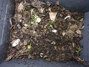 Compost En Appartement : le lombricomposteur le compost d 39 appartement page 4 ~ Melissatoandfro.com Idées de Décoration