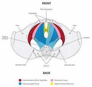 Prenatal Postpartum Fitness Exercise Workouts Resources