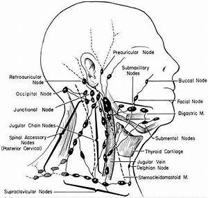 Diagram Of Lymph Node Head