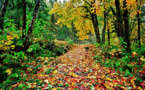 Colourful Autumn Background by Colorful Autumn Path Wallpapers Colorful Autumn Path