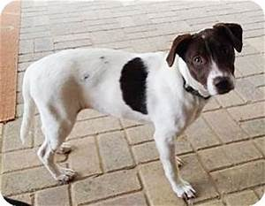 Drakey   Adopted Puppy   Lawrenceville, GA   Border Collie ...