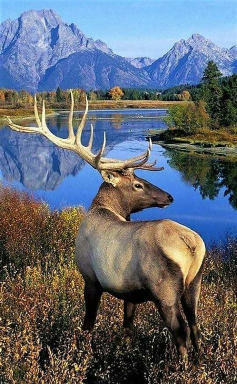 magn 237 fico paisaje y precioso animal landscapes