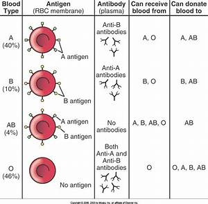 Blood  Lymphatic  And Immune Systems