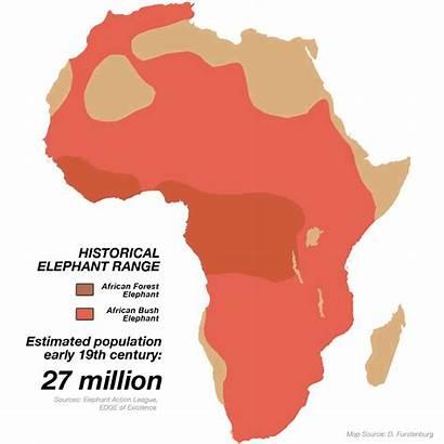 African Elephant Elephants Range Population Africa 19th