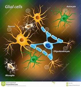 Glial Cartoons  Illustrations  U0026 Vector Stock Images