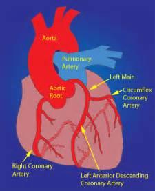 Coronary Artery Anatomy Diagram
