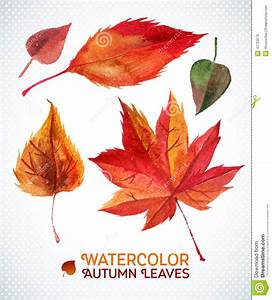 Watercolor Autumn Leaf Set.Vector Illustration Collection ...