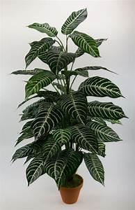 Pflanze Große Blätter : aphelandra pflanze 90cm gr n wei pf kunstpflanzen kunstbaum k nstliche pflanzen ebay ~ Avissmed.com Haus und Dekorationen