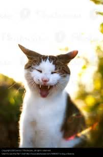 Cats Funny Faces Emoji