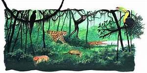Ecosistemas: Pero la selva tropical tiene problemas