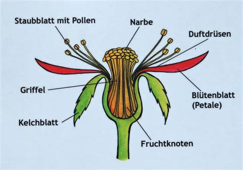 Rose Diagrams Wikimedia Commons