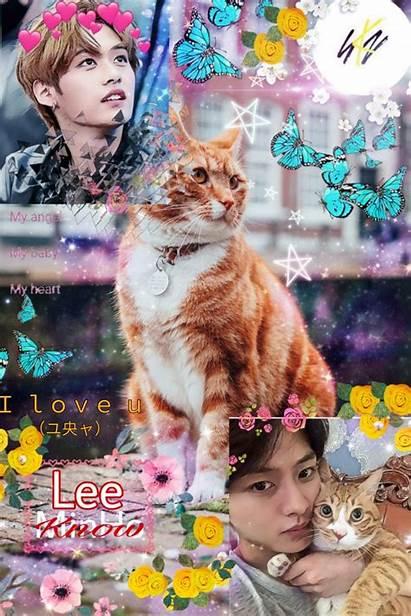 Stray Lee Know Kpop Movie