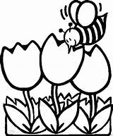 Coloring Pages Bee Tulips Printable Print Flowers Sheet sketch template